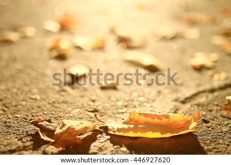 fallen yellow autumn leaves background, texture - stock photo