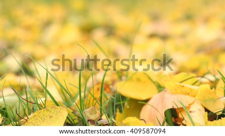 Fallen yellow autumn leaves on ground. Patch of fresh green grass in focus in foreground. Beautiful fall park. Season wallpaper. Selective focus. Shallow DOF, shallow depth of field. - stock photo