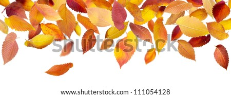 Falling autumn leaves isolated on white background - stock photo