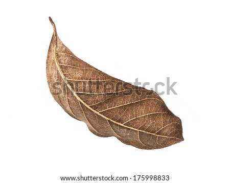 Falling dry leaf isolated on white background