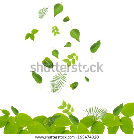 Falling green leaves isolated on white - stock photo