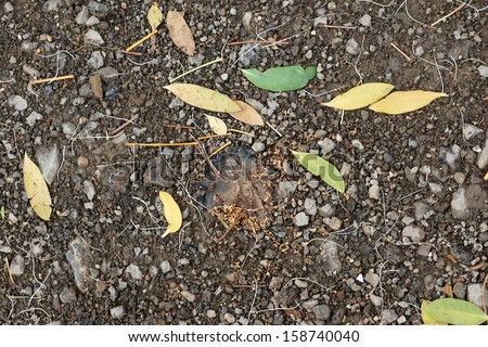 Falling leaves decomposition on soil - stock photo
