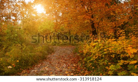 Falling oak leaves on the scenic autumn forest illuminated by evening sun - stock photo
