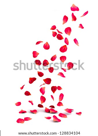 Falling Rose Petals - stock photo