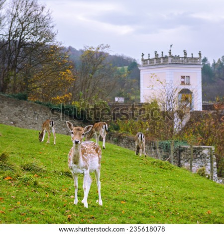 Fallow deer in the park of the largest monastery complex Heiligenkreuz, Austria - stock photo