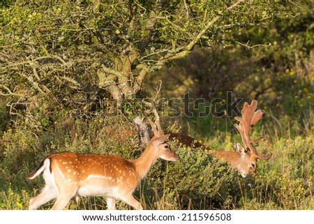 Fallow deer stags in a forest - stock photo