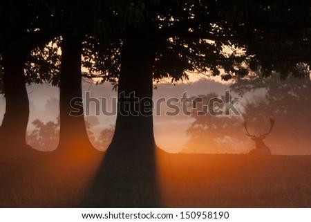 Fallow Deer Sunrise - stock photo