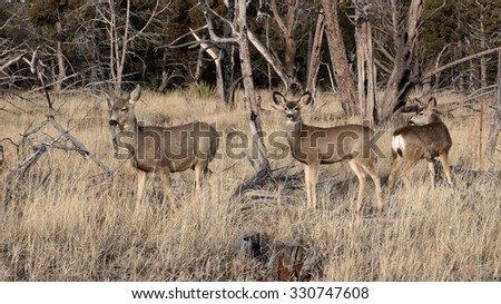 Fallow deers making their way into the forest