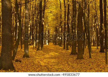 Falls Beauty nature scene. Autumnal Park Autumn Trees Autumn forest
