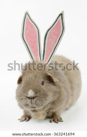 false bunny - stock photo