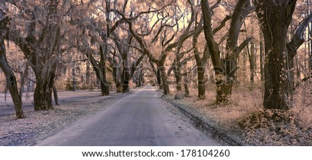 false color infrared photo of empty road through forest canopy - stock photo