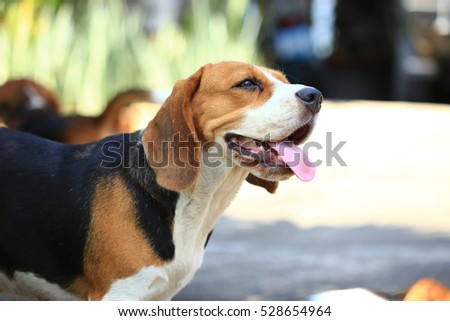 Family Beagle Dog in Park