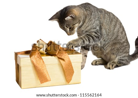 Family cat enjoying Christmas pawing at a large gold wrapped gift with its paw in an effort to discover the contents isolated on white - stock photo