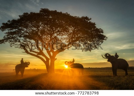 Family elephant eating leaves at sunrise.