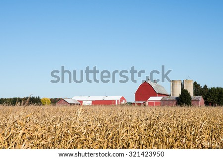 Family Farm Scene in the Fall - Red barn and other rural farm buildings behind a field of dry autumn corn.  Ample copy space in clear sky if needed. - stock photo