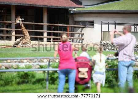 Family from four persons feeds and takes pictures  giraffe in zoological garden - stock photo