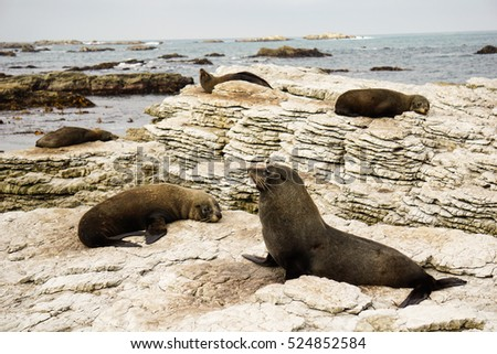 Family fur seal sleeping at Ohau Point Seal Colony, Kaikoura, New Zealand