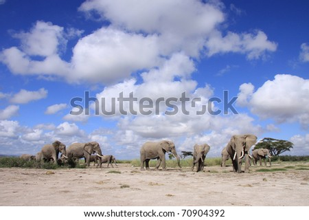 Family group of elephants in the open savanna of East Africa