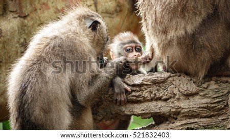 Family members with baby monkey and parents