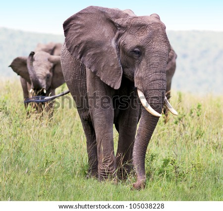 Family of african elephant on the Masai Mara National Reserve, Kenya - stock photo