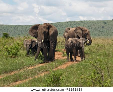 Family of african elephant on the Masai Mara National Reserve - Kenya - stock photo