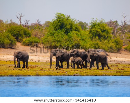 Family of african elephants at the river on sunny day. - stock photo