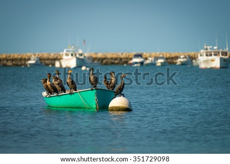 Family of cormorants resting on the boat - stock photo