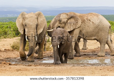 Family of elephants at a waterhole on a hot summers day