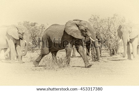 Family of elephants from the vast herds grazing in african savannah in the National Park Chobe - Botswana, South-West Africa (stylized retro) - stock photo