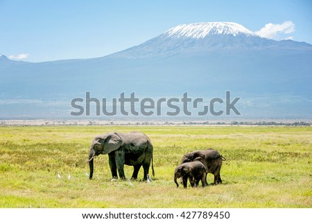 Family of Elephants in Kenya with Kilimanjaro mount in the background, Africa - stock photo