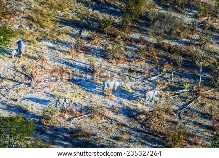 Family of elephants in the Okavango Delta (or Okavango Grassland), which is one of the Seven Natural Wonders of Africa (view from the airplane) - Botswana, South-Western Africa - stock photo