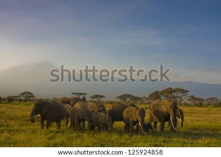 Family of elephants on a background of Kilimanjaro - stock photo