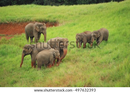 family of elephants walking towards a hole for a food