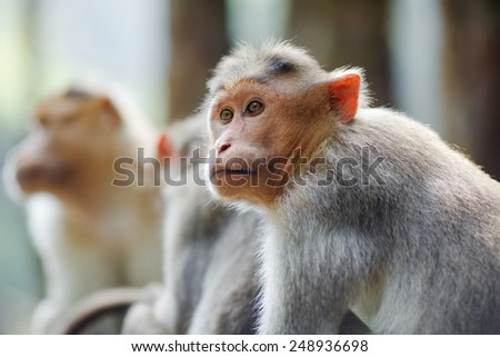Family of four monkeys sitting on a large stone in the Indian forest