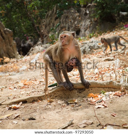 Family of monkeys - mother with small baby - stock photo