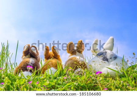 Family of rabbits looking the sky on a green meadow