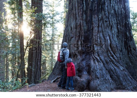 family of two enjoying giant redwood tree at redwoods national park, california, usa