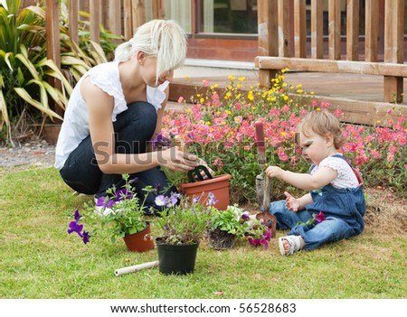 Family plant colorful flowers in a flowerpot