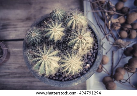 Family potted plants, plants, cactus