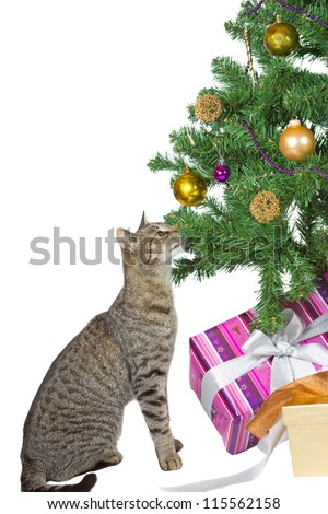 Family tabby cat sitting under the tree eyeing the tempting Christmas decorations isolated on white - stock photo