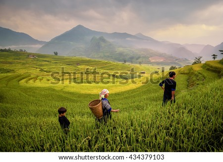 Family tribal woman wear costume working in rice fields of rice terraces