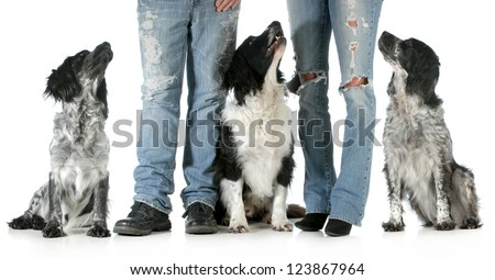 family with dogs - husband and wife with three dogs isolated on white background - stock photo