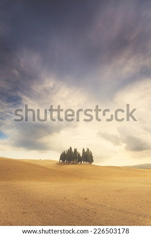 Famous cypress trees in Tuscany - stock photo