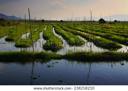 Famous floating gardens on the Inle Lake, Myanmar - stock photo