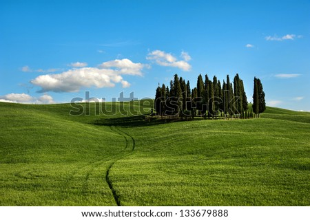 Famous group of Cypresses in Val d'Orcia/ Tuscany Cypresses/ Siena, Tuscany, Italy - stock photo