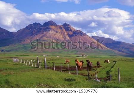 Famous Icelandic horses in rural countryside. The rhyolite gave to the east coast of Iceland this multicolored aspect. In this marvelous landscape lived the painter Kjarval. - stock photo