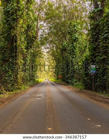Famous mile long tunnel of Eucalyptus trees along Maluhia Road to Koloa Town, Kauai Hawaii