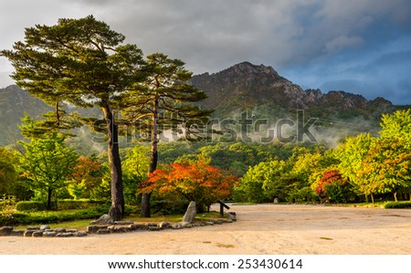 famous pair pines in the morning light - symbol of Seoraksan National Park, South korea  - stock photo