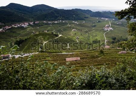 Famous Prosecco's Vineyards, Valdobbiadene, Italy - stock photo