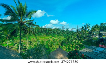 Famous rice terraces near Ubud in Bali in sunny summer day - stock photo